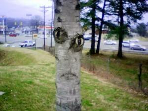 Creepy Tree!