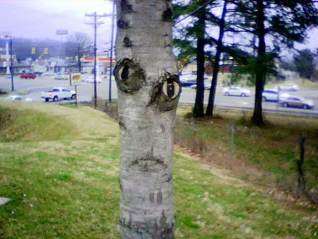 creepytree.jpg
